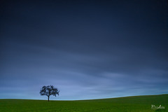 Bad day to make a photo (borisss1982) Tags: blue sky cold tree green grass rain night clouds canon evening nacht himmel wolken rainy lonely gras bluehour grn blau kalt baum regen regnerisch einsam blauestunde matchpointwinner adend pregamesweepwinner