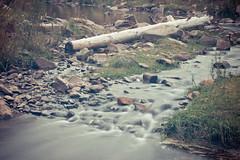 Fluyendo (Bernardo Guzman Roa) Tags: rio agua pasto nd tronco rocas 2014