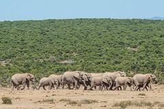 Suedafrika-60 (Lukas P Schmidt) Tags: elephant addo nationalpark elephantpark