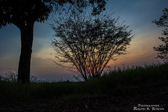 Siluetas que enamoran! (rogersrincon2893) Tags: sol arboles amanecer cielo nubes saliendo siluetas stratos bellezas ramas airelibre despejado