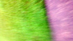 Accidental Picture. (dccradio) Tags: blur grass concrete nc blurry lawn northcarolina blurred sidewalk greenery oops accidental lumberton accidentalphoto accidentalpicture robesoncounty