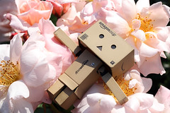 Lakewoods Garden/Canon EOS60D:Canon EF-S60mm F2.8 Macro USM (telenity) Tags: danboard flower