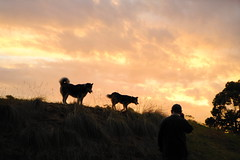 Chief and Storm Sunset (christinemargaretlynch) Tags: sunset husky lawsondogpark