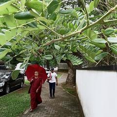 #monk #budhism #colombo #sri_lanka #ceylon #umbrella #red #tree #streetphotography #Flickr (Bruno Abreu) Tags: instagram ifttt