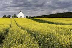 St. Huberts Church. (muddlemaker1967) Tags: yellow architecture clouds lens landscape spring nikon hampshire nikkor f28 rapeseed polariser 2870mm d700