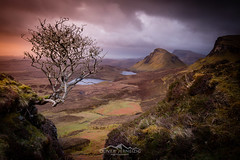 lonely tree  quiraing  isle of skye  scotland (Oliver Jerneizig) Tags: morning sunset england sun tree skye canon landscape scotland highlands isleofskye outdoor north wilderness landschaft 6d quiraing mountaing sunrire canon6d oliverjerneizig oliverjerneizigde wwwoliverjerneizigde