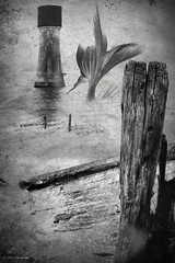 Tales from the river bank (roddersdad) Tags: blackandwhite lighthouse coast may coastal fantasy humber 2016 riverhumber spurnpointlowlighthouse copyrightclivejmaclennan cliveg1hkfeclipsecouk fujifilmxt1 fujinonxf56mmf12rlens httpswwwflickrcomphotosroddersdad