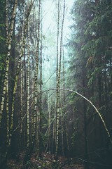 in the woods (Kalbsroulade) Tags: wood trees forest woods wald bume baum gespenstig