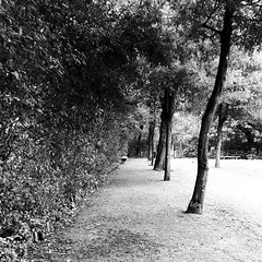 italy #florence #boboli #boboligarden #palazzopitti #pitti... (ER-Photo) Tags: italy contrast garden florence spring pitti boboli blackandwhitephotography gardendesign palazzopitti boboligarden uploaded:by=flickstagram instagram:photo=12209768950226827592204679691