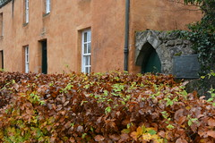 orange house (Hayashina) Tags: uk autumn orange window scotland bush roslin hww