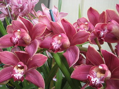 Care of Orchids After Flowering (adibaziz12) Tags: orchids flowering after care