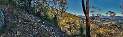 Going up to mount May (Tatters ) Tags: stitch pano australia mtbarney mountbarney mtbarneynationalpark oloneo