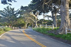 Winding road with fences (stevelamb007) Tags: california road fence monterey nikon 17miledrive winding pacificgrove delmonteforest 18200mmvr stevelamb d7200