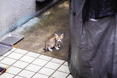 Today's Cat@2016-06-13 (masatsu) Tags: cat pentax catspotting mx1 thebiggestgroupwithonlycats