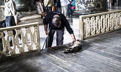 El gato de Santa Sofa (Nebelkuss) Tags: estambul istambul santasofa ayasofya gatos cats callejeras street fujixpro1 fujinonxf35f14 momentos moment ladrondemomentos instantes instant instantsthieve elzoohumano thehumanzoo
