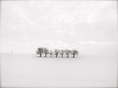 trees in winter (olipennell) Tags: schnee snow tree germany deutschland baum weinsteige beutelsbach weinstadt badenwurttemberg sunrays5