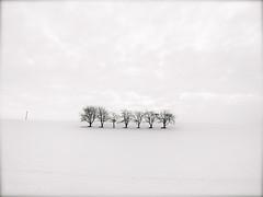 trees in winter (olipennell) Tags: schnee snow tree germany deutschland baum weinsteige beutelsbach weinstadt badenwurttemberg sunrays5