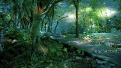 Enchanted (brandonvle) Tags: night forest starry enchanted brandonvle