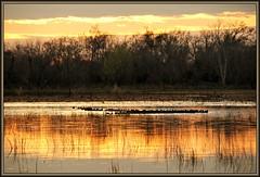 Coot congregation (WanaM3) Tags: park sunset reflection water golden pond texas houston marsh coot flickrdiamond wanam3 elfrancoleepark
