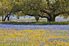 Amazing Field of Flowers