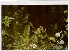 . (Nathan Winds) Tags: selva