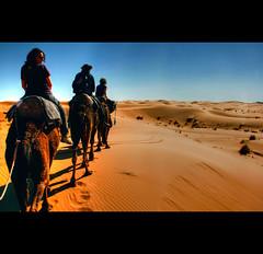 Camel ride (Ivan Serra) Tags: sahara sand ride desert dunes dune camel morocco desierto marruecos dunas camellos