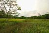 DSC_0134a (lightmeister) Tags: house abandoned singapore mansion tyersall woodneuk istanawoodneuk