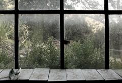 09.09.2011: Düstere Idylle