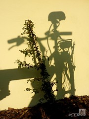 Schattenfahrrad  / shadow-bicycle (Ellenore56) Tags: light shadow sun sunlight inspiration color colour detail reflection bike bicycle silhouette wall licht photo spring focus foto wand magic perspective vista imagination barrier outlook moment magical sonne farbe reflexion schatten fahrrad springtime perspektive flicker lenz shadowing reflektion frhling augenblick shading fokus shadowlight faszination sonnenlicht schattenriss schattenwurf schattenbild umriss schattenlicht springtide panasoniclumixdmctz7 ellenore56 22032012 schattenfahrrad shadowbicycle