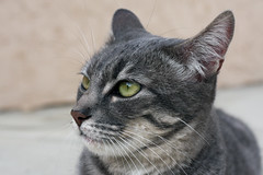 wonder what he's thinking? (Maxiii!) Tags: animal cat furry looking kitty meow pondering
