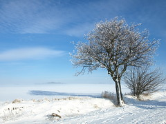 Classic winter scenery (DameBoudicca) Tags: schnee winter snow lund tree skne vinter sweden hiver nieve schweden neve rbol invierno neige sverige albero inverno arbre sn baum trd suecia sude svezia gamladalbyvgen