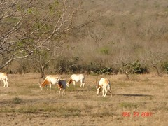 """BSR Oryx • <a style=""""font-size:0.8em;"""" href=""""http://www.flickr.com/photos/77680067@N06/6881424524/"""" target=""""_blank"""">View on Flickr</a>"""