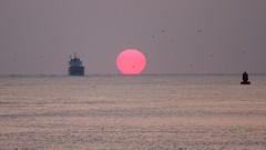 Sunset arrival (MarkCantPark) Tags: sunset sun water netherlands canon boat rotterdam marine waves ship vessel maritime 7d nautical