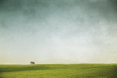 So Long, Lonesome (ThomasBlumenthal) Tags: life light summer sky elephant green texture nature colors field animal landscape shadows open sweden compo teenager lonely misplaced nikon90 thomasblumenthal