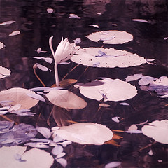 Lilypad Reflection (melissathall) Tags: ir waterlily infrared verobeach mckeebotanicalgardens