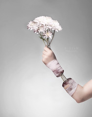 The Giving back  -   (F l S f a h .. ) Tags: flowers white green art girl digital dark photography back hand giving photoshope          flsfah
