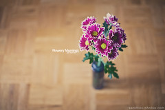 Flowery mornings at home (Maegondo) Tags: morning pink light flower canon germany bayern deutschland bavaria typography eos 50mm soft dof purple bokeh 14 depthoffield earthy 5d dreamy hazy schrfentiefe ingolstadt mark2