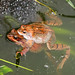 Frogs NottsWT cpt J Smith