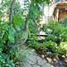 Bev Sutton's garden - Humber River, west Toronto