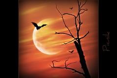 Picnik (sillitilly) Tags: red sky orange moon black colour tree nature silhouette bat picnik