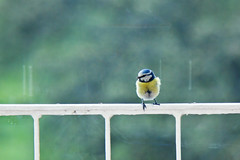 Look, a bird (55Laney69) Tags: cute bird nature pen photoshop bokeh olympus adapter tele exacta wideopen 400mm 200mm canonfd mft bokehlicious digitalrev epl1 microfourthirds alienskinexposure3 exacta702004556