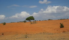 Yelow Sand Dunes