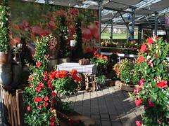 Tag der offenen Gärtnerei 2013