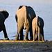 Namib_26_06_2012_0079