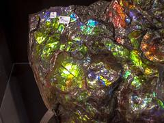 Ammolite Gleaming, Aurora Ammonite Mine (cobalt123) Tags: ammonite throughglass ammolite tucsonrockandgemshow2013 auroraammoniteminecanadacolorfulfossilnacreshinesp auroraammoniteminecanadacolorfulfossilnacreshinespecimen
