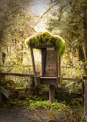 Hoh Rain Forest phone booth (nc-designs) Tags: ocean park bridge trees sea vacation sky cliff white black mountains green beach water up grass rain closeup sepia clouds forest vintage river booth foot blackwhite moss high sand woods hoh rainforest phone close view cloudy footbridge hiking path stones antique branches telephone tide famous low shoreline rocky pebbles brush hike stack driftwood anemone national bark pile shore stepping haystack boardwalk cave hay olympics ruby rubybeach viewpoint tidepool mossy seaanemone grassy hohrainforest knobby