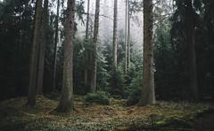 Tranquil (desomnis) Tags: wood trees mist nature rain misty fog woodland austria sterreich haze woods foggy tranquility tranquil upperaustria mhlviertel bhmerwald bohemianforest sigma35mm canon6d desomnis