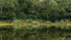 Reflexo (Vanderli S. Ribeiro) Tags: verde lago nikon natureza paisagem campo pelotas reflexo mata refletir vanderlisribeiro vanderlisr