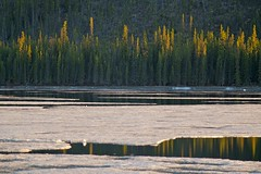 Shot Across the Lake with Tokina AT-X 100-300mm f4 MF Lens & Metabones N/F Adapter (MIKOFOX  Catching Up!) Tags: canada ice water forest landscape spring may yukon spruce 3000mm xt1 bigfoxlake fujifilmxt1 mikofox tokinaatx100300mmf4mflensmetabonesnfadapter