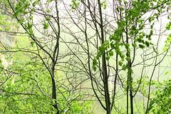 ACOGEDORA NIEBLA (iigomatesanz) Tags: nature niebla navarra urederra bakedao